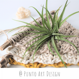 Wall Air Plant Holder